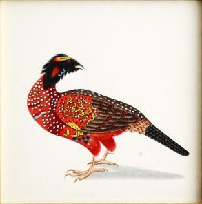 Natural History Drawings (watercolour)
